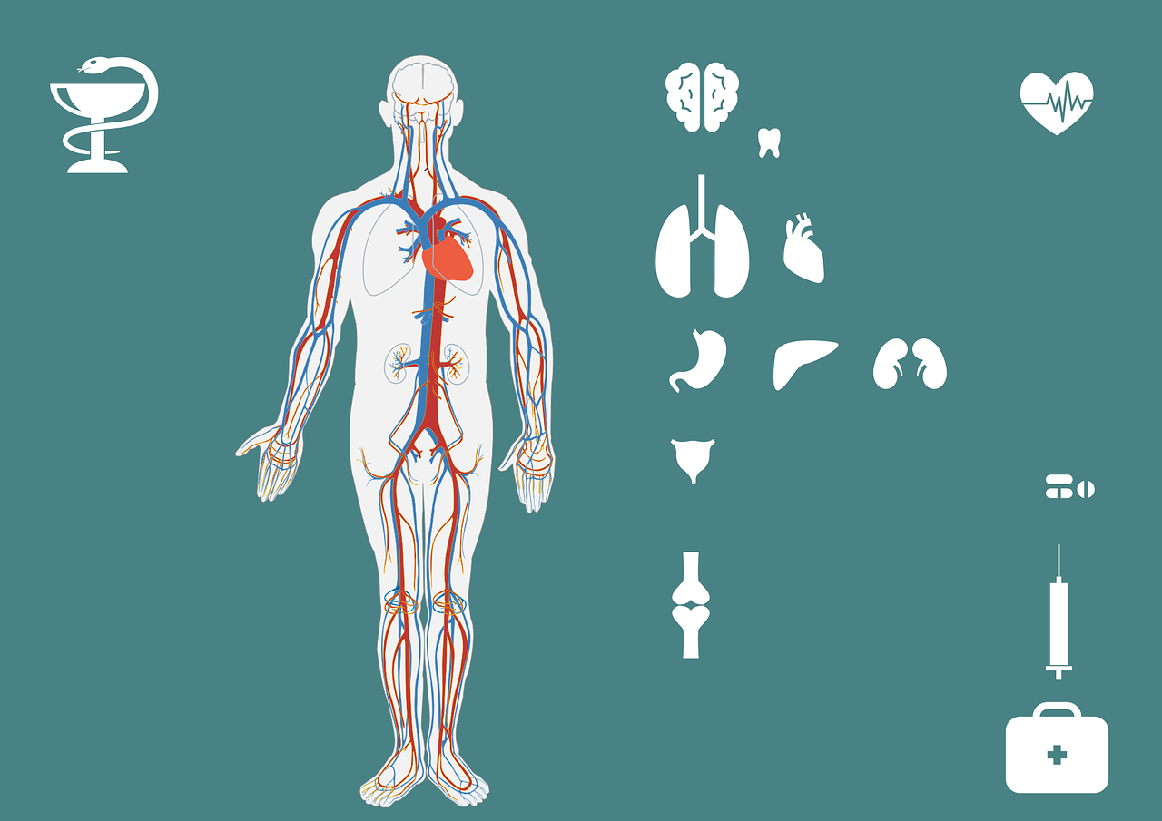 Nierenreinigung: Gesundheit für Nieren&Blase - blasenentzuendungheilen