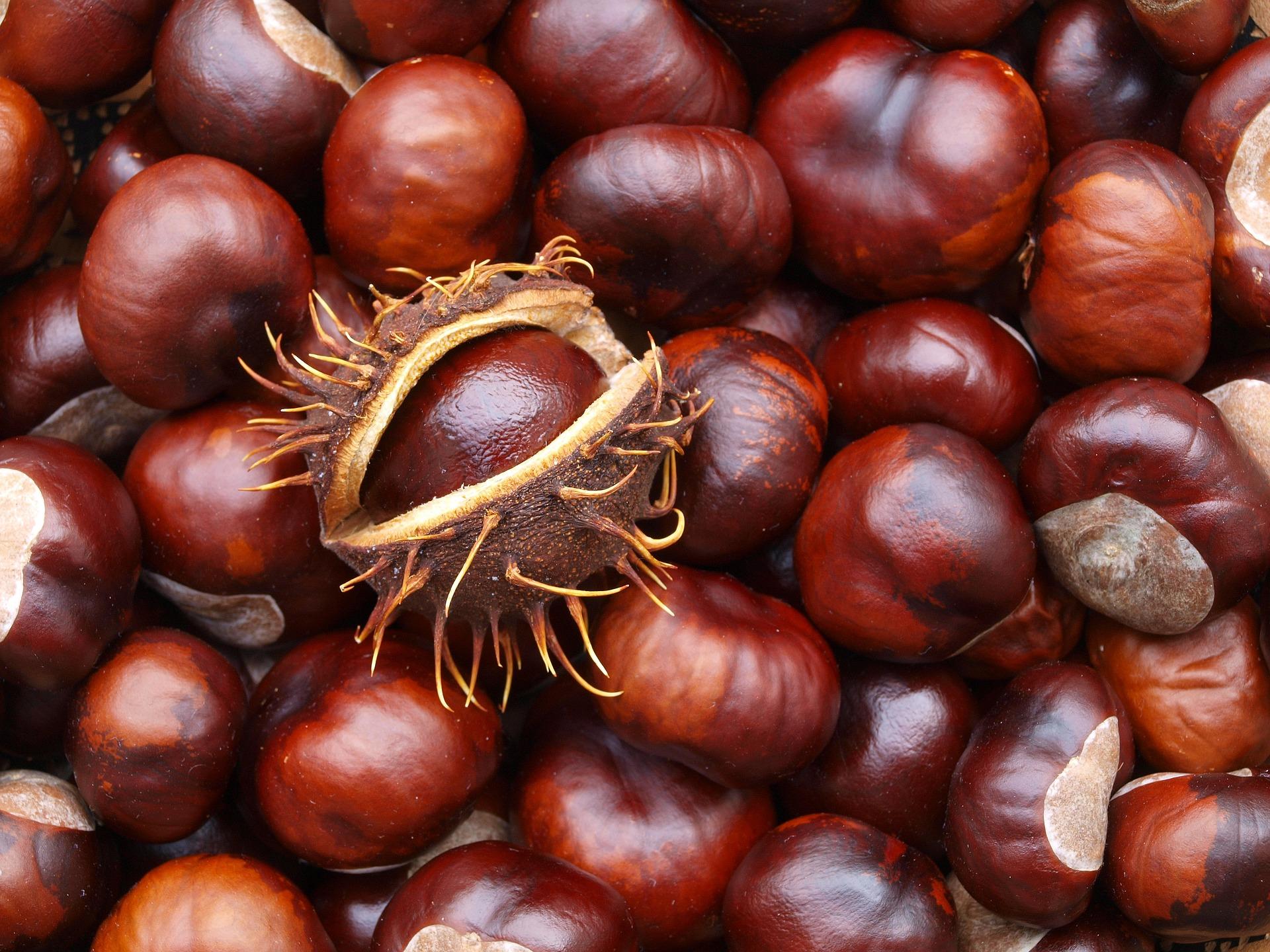 Nierenreinigung - Gesundheit für Nieren&Blase blasenentzuendungheilen Blasenentzündung Cystitis Harnwegsinfekt Nieren essen für die Nieren Maroni